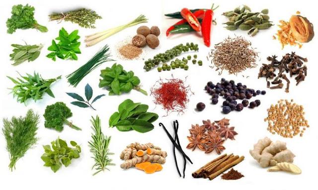 The most commonly used culinary herbs and spices. Začini i začinsko bilje u kulinarstvu
