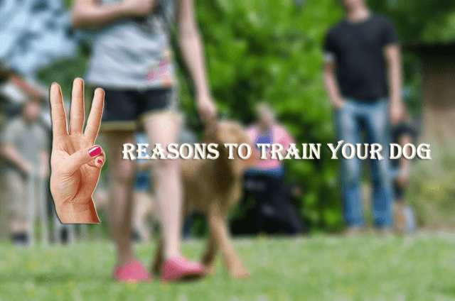 Three Reasons To Train Your Dog