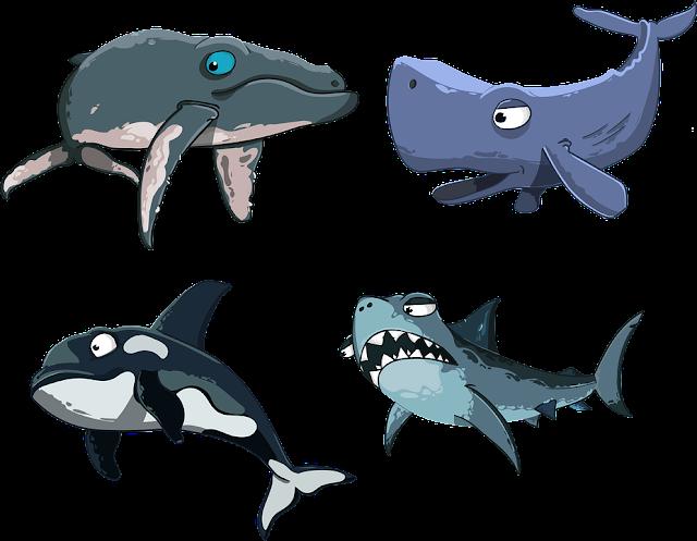 Gambar Kartu Ikan Hiu