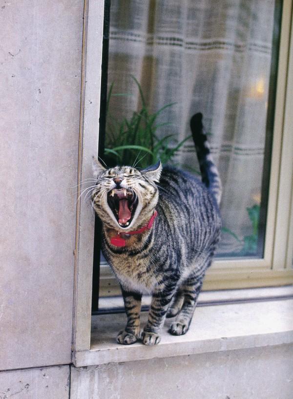 Windowsill cat of Venice, Italy