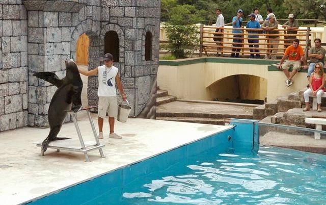 Show leões marinhos no zoológico de Buenos Aires