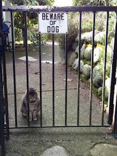 cat,beware