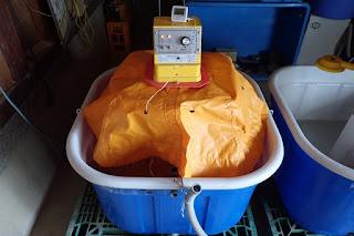 鉄コーティング湛水直播の浸種設定温度