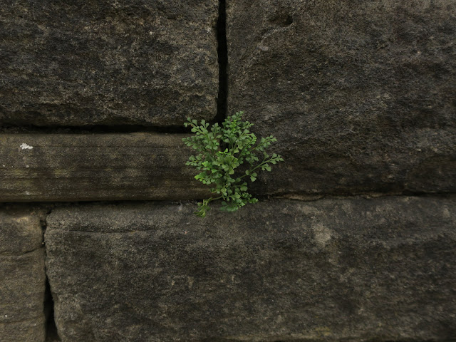 Small green plant growing out of black stone wall.