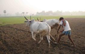 পশ্চিমবঙ্গের কৃষক || Farmers of West Bengal || Indian peasants and West Bengal