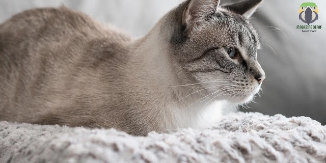 For what reason Is How To Recognize Stress In Cats So Famous?
