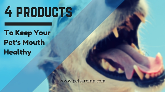 Products for Pet Oral Health