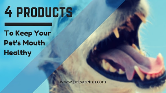 Products for Your Pet's Oral Care