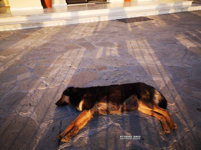 Ζεσταίνονται τα σκυλιά το καλοκαίρι - Τι ισχύει για το κούρεμα