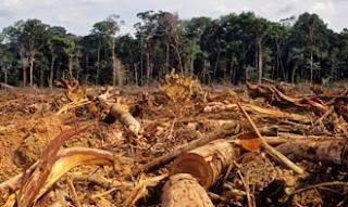 human activities that can disrupt environmental-balance