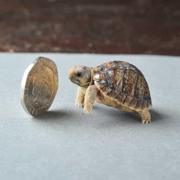تعرف على أصغر 5 حيوانات في العالم