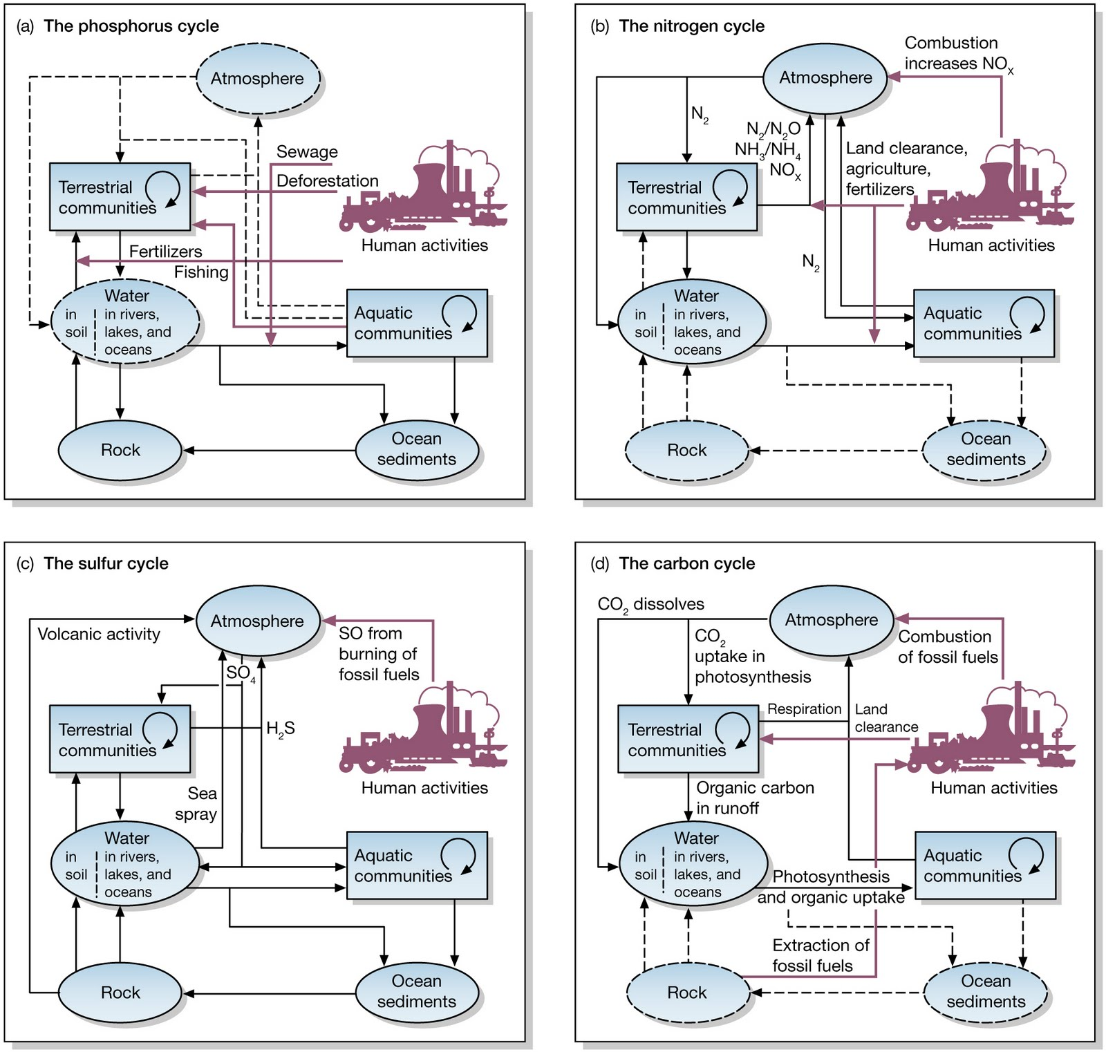 Shappellology Ecosystem Cycles Pools And Fluxes