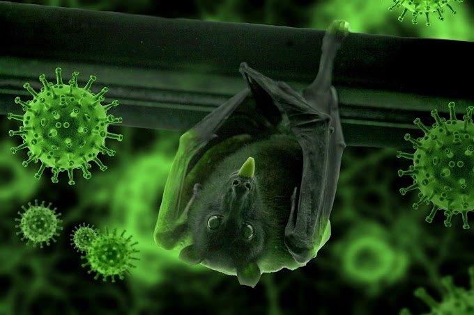 Electrified Bats as source for vaccine to fight deadly Viruses like Filoviruses, Coronavirus etc.: A Hypothetical approach.