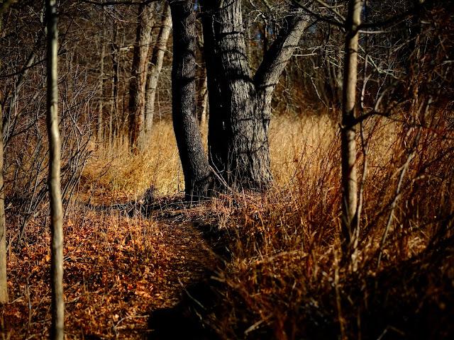 Image taken with a Fujifilm X-Pro1