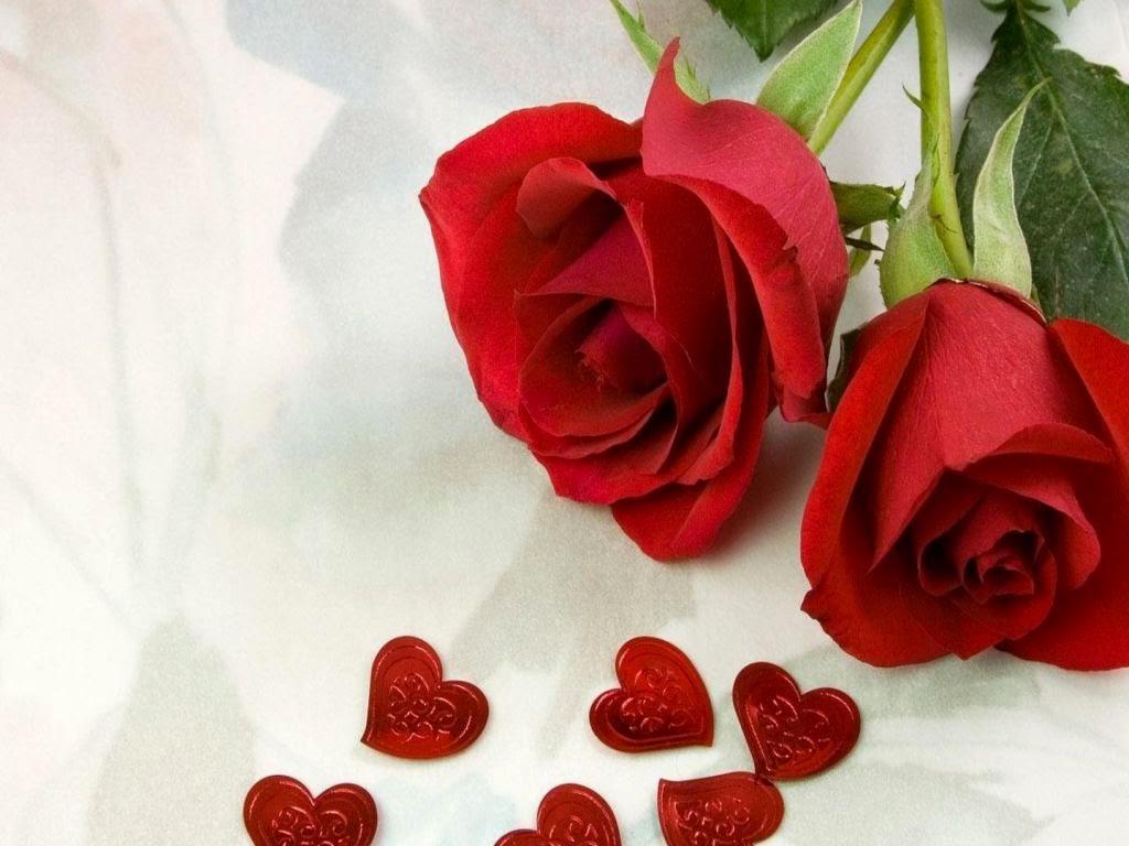Jendela Gambar Mawar Merah