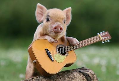 Pig Pig Pig!