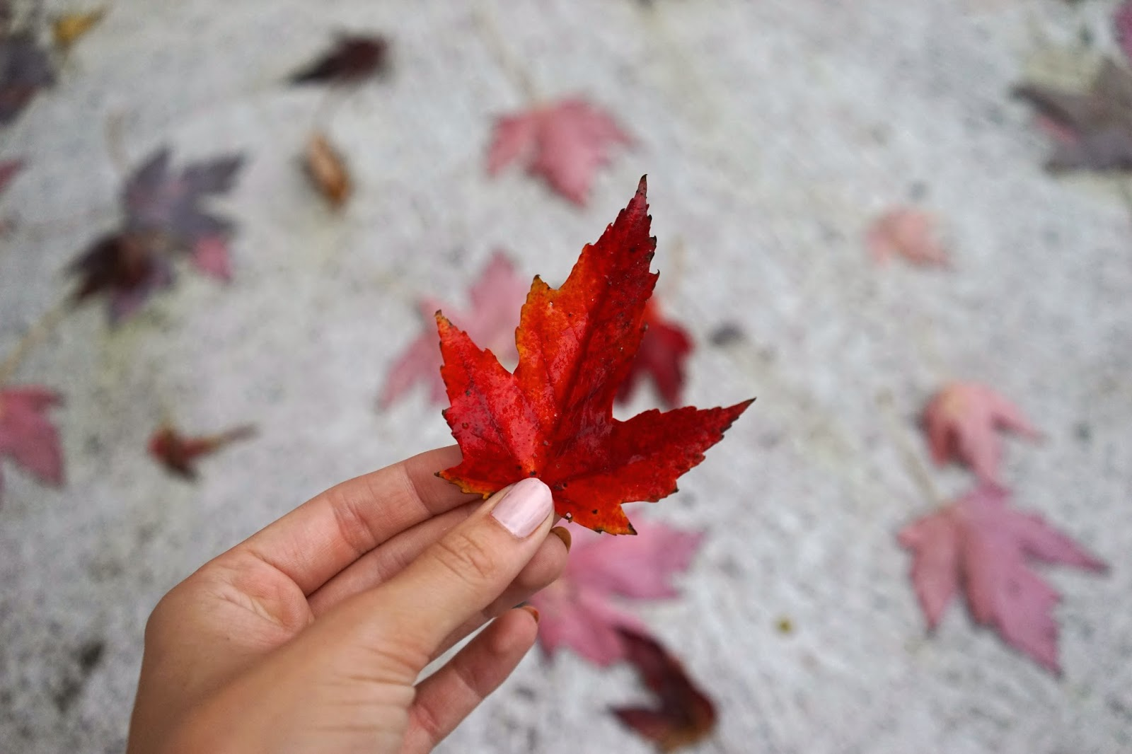 montreal fall