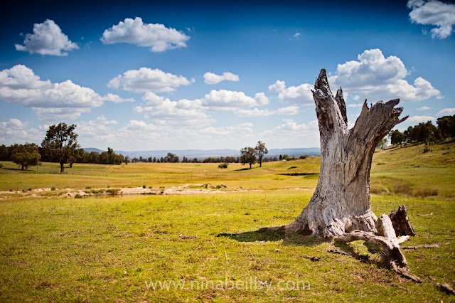 Landscape photography Australian countryside Rylstone Sheep