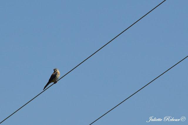 Oiseau au Pérou