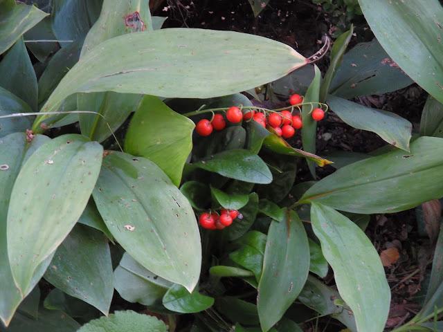 czerwone owoce