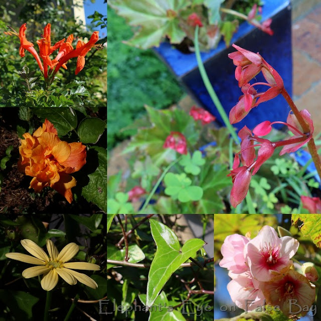 July colour in our garden
