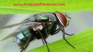 detektor lalat mendeteksi lalat