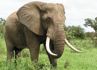 essay on shooting an elephant co essay