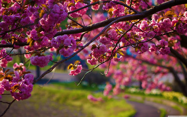 Spring-Wallpaper-Download