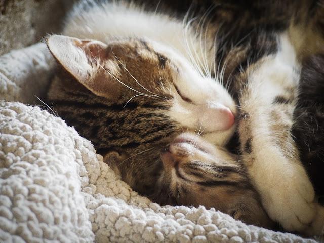 Mama en kitten
