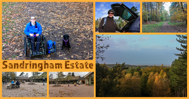 A collage of photos showing me in my mountain trike with Liggy, my black labrador, in the woods, surrounded by orange and brown leaves and a mixture of different trees.