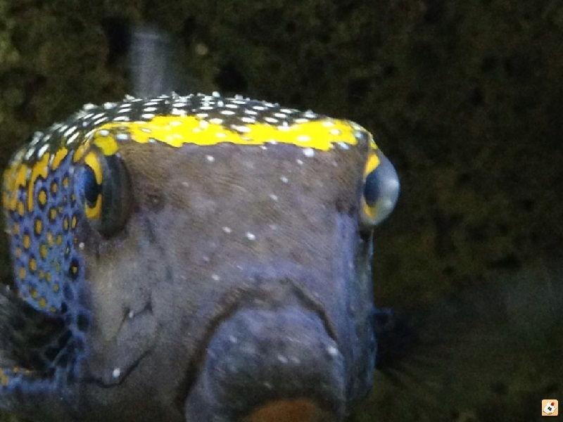 Ciri-Ciri Ikan Sakit atau Stress Terdapat Bercak Putih
