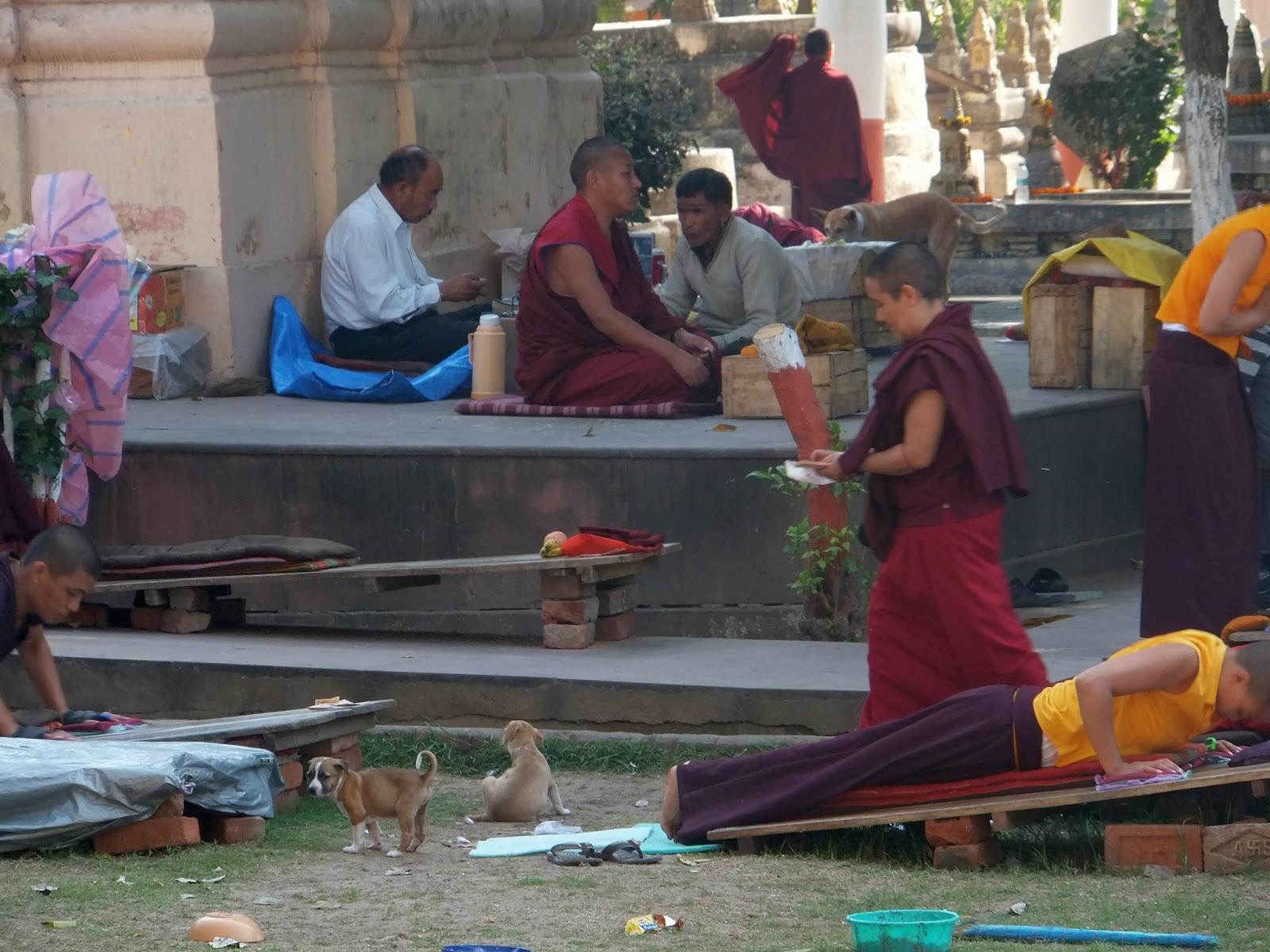 жизнь монахов в Бодхгая