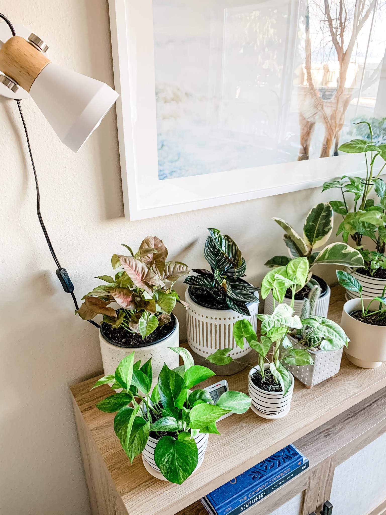 Assorted houseplants on a table under an indoor grow light