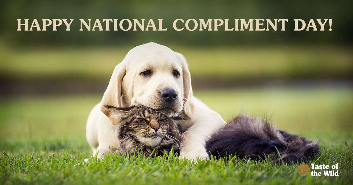 National Compliment Day Wishes pics free download