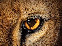 Assistir Zoo 3x04 Online Legendado S03E04