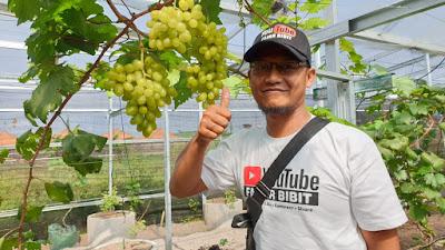 Fajar Alwani Sukses Ciptakan Bibit Anggur Kualitas Super