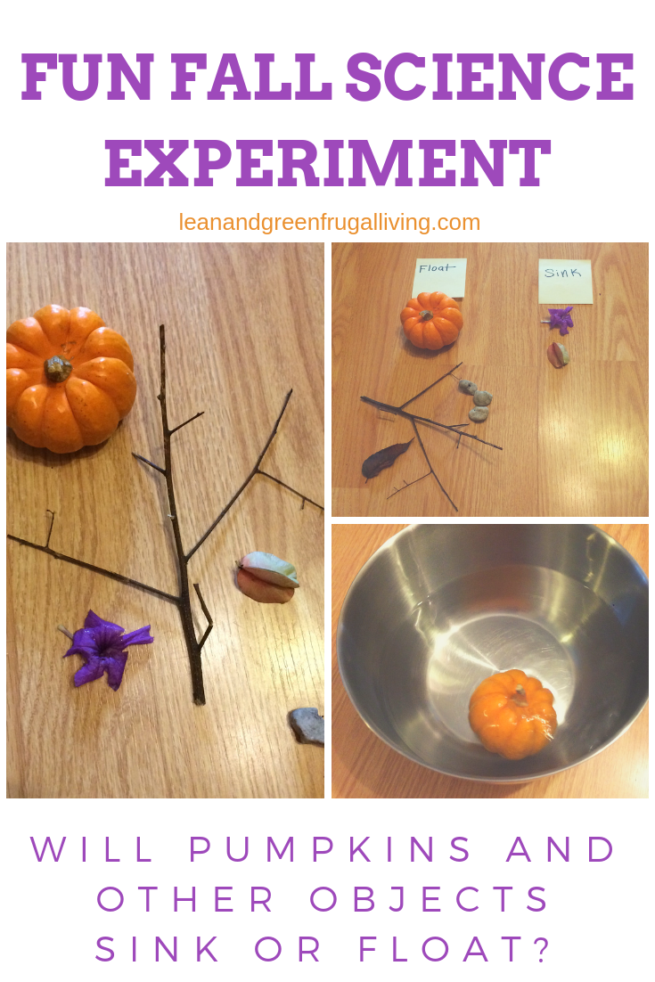 Fun Fall Science Experiment- Will Pumpkins and Other Objects Sink or Float?