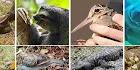 اغرب 10 حيوانات كسولة في العالم