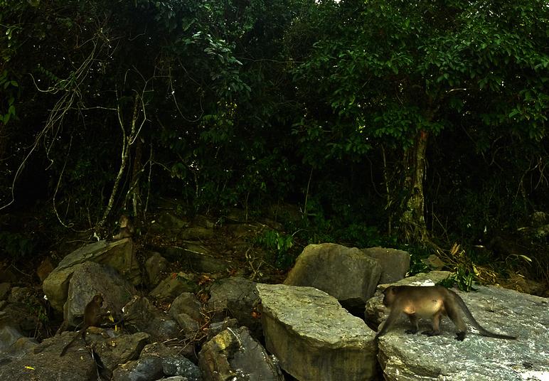 Wild Monkey at Phi Phi Island