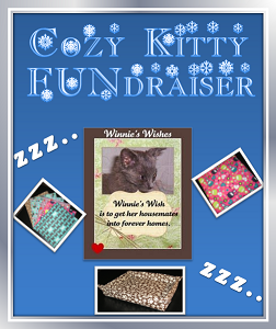 Cozy Kitty FUNdraiser!