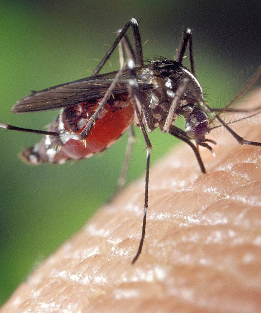 As doenças que vieram da Amazônia nunca geraram pandemias. Relacionar com Covid é ignorância.