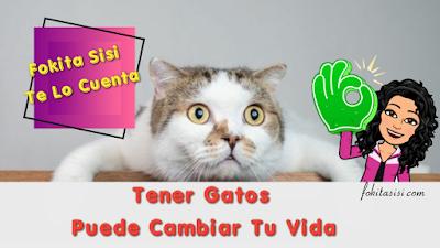 (Imagen) Curiosidades Interesantes del Gato Mascota