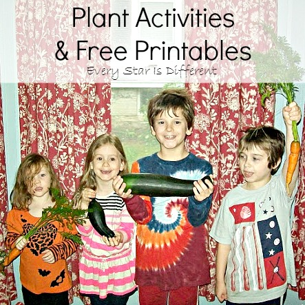 Plant Activities and Free Printables