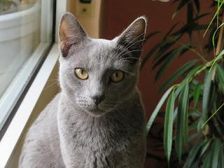 Gato de ojos amarillos