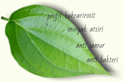 kandungan daun sirih