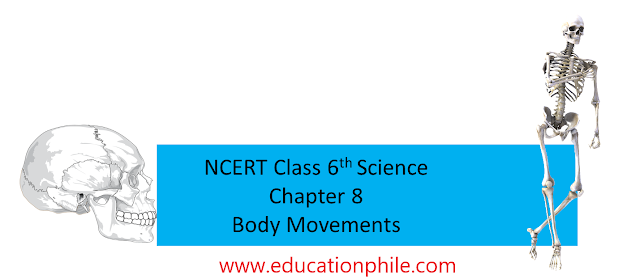NCERT class 6th science chapter 8 body movements, free solution ncert class 6th, class 6th free solution, free solutions body movements