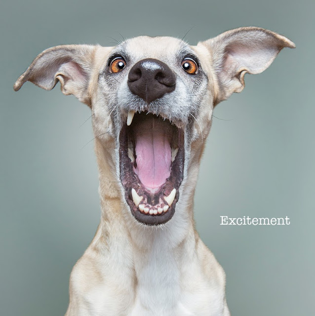 Elke Vogelsang, Dogsonality, fotografía, photography, dogs, perros, excitement, emoción