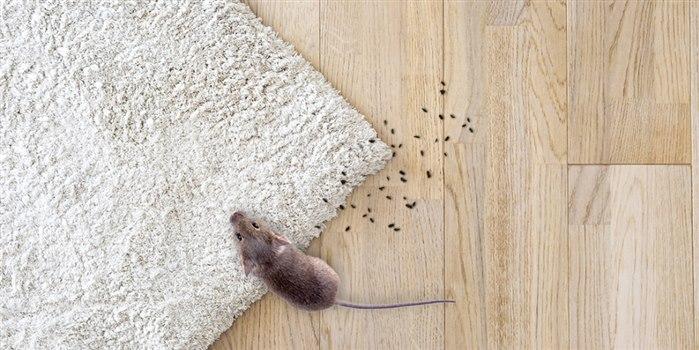 Fare pisliği nasıl temizlenir?