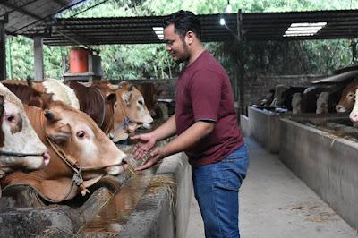 pengusaha peternakan sapi potong