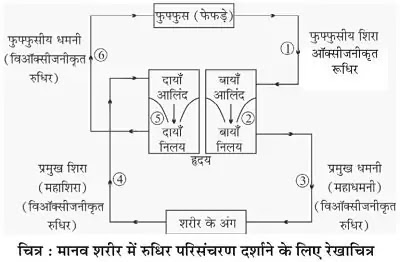 10 Class Science Notes in hindi chapter 6 Life processes